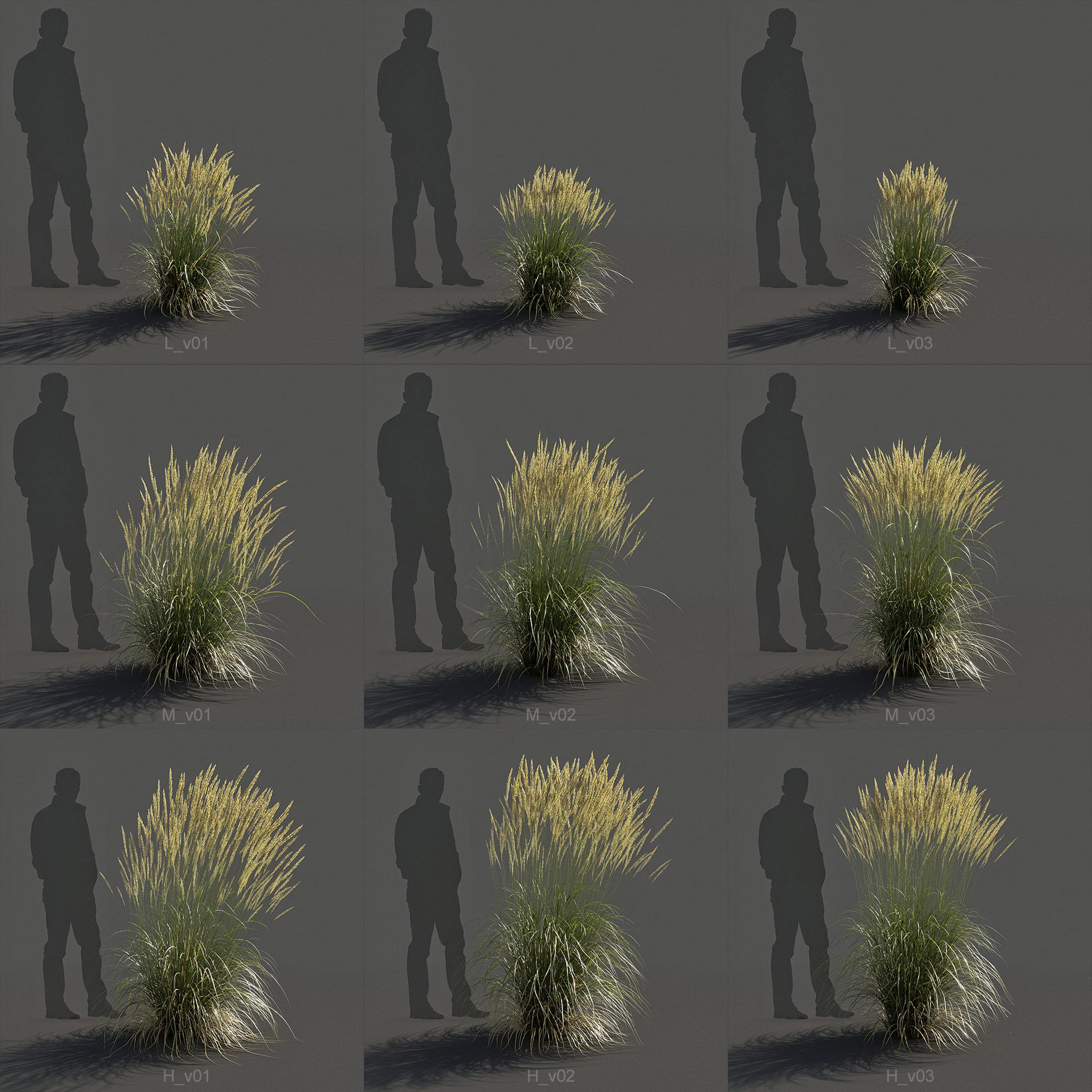 Feather Reed Grass 3D model renders -  'Karl Foerster' - Calamagrostis acutiflora