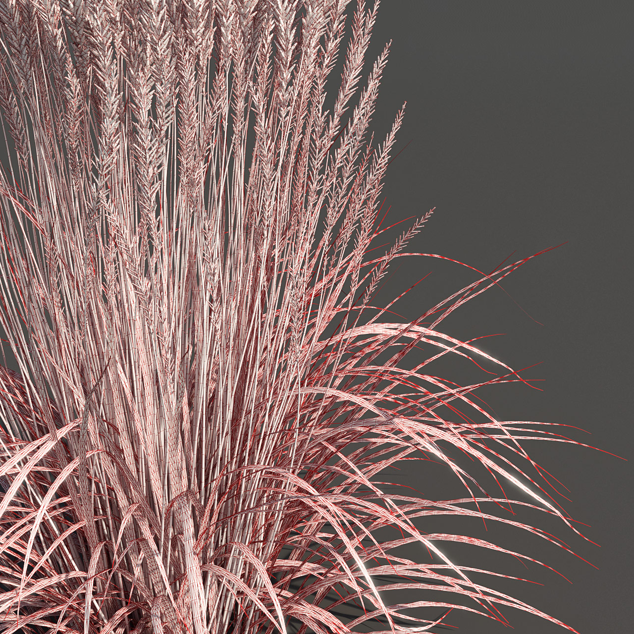 Feather Reed Grass 3D model wireframe -  'Karl Foerster' - Calamagrostis acutiflora
