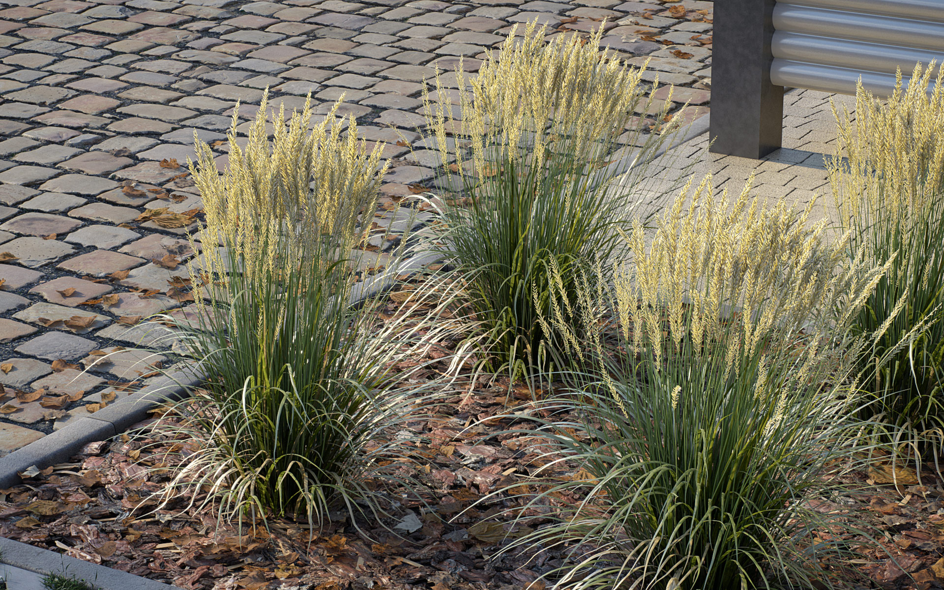 Feather Reed Grass 3D model example3 - 'Karl Foerster' - Calamagrostis acutiflora