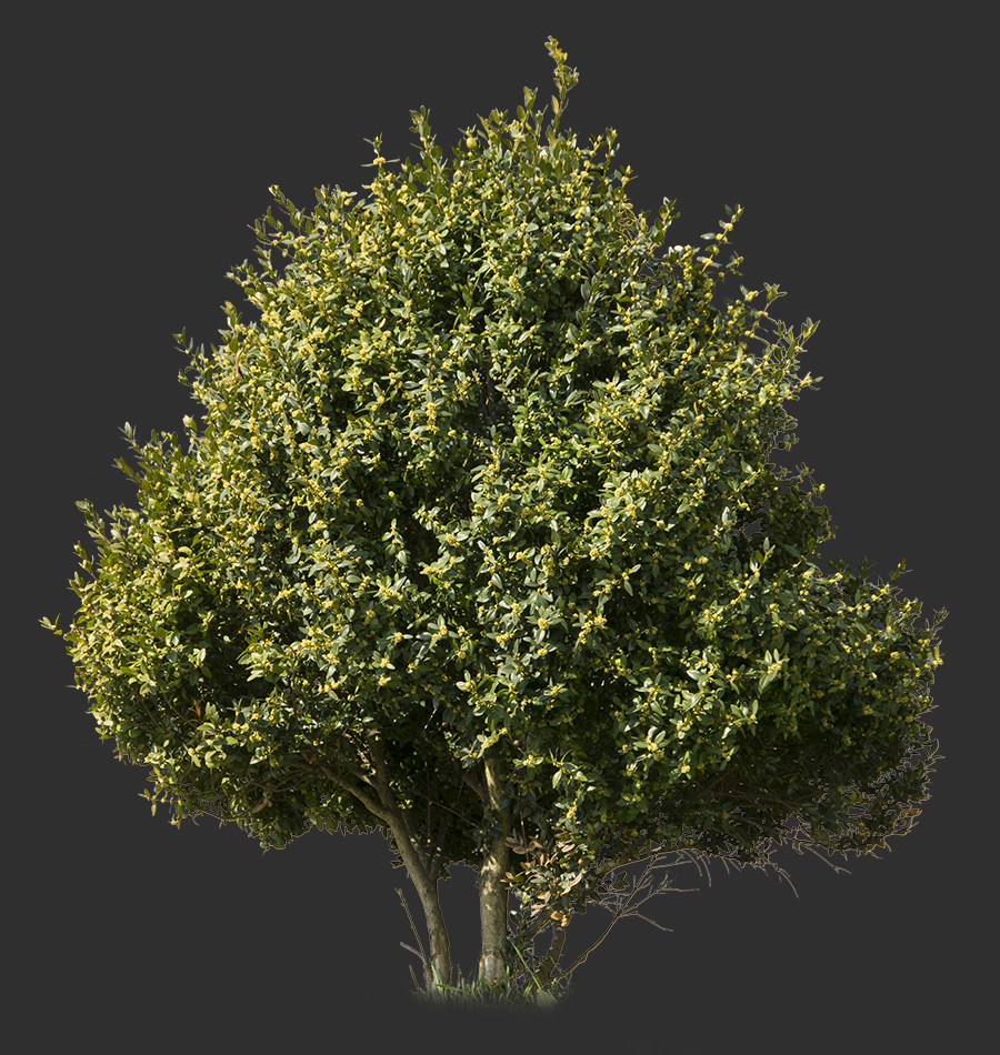 Bush Cutout 01