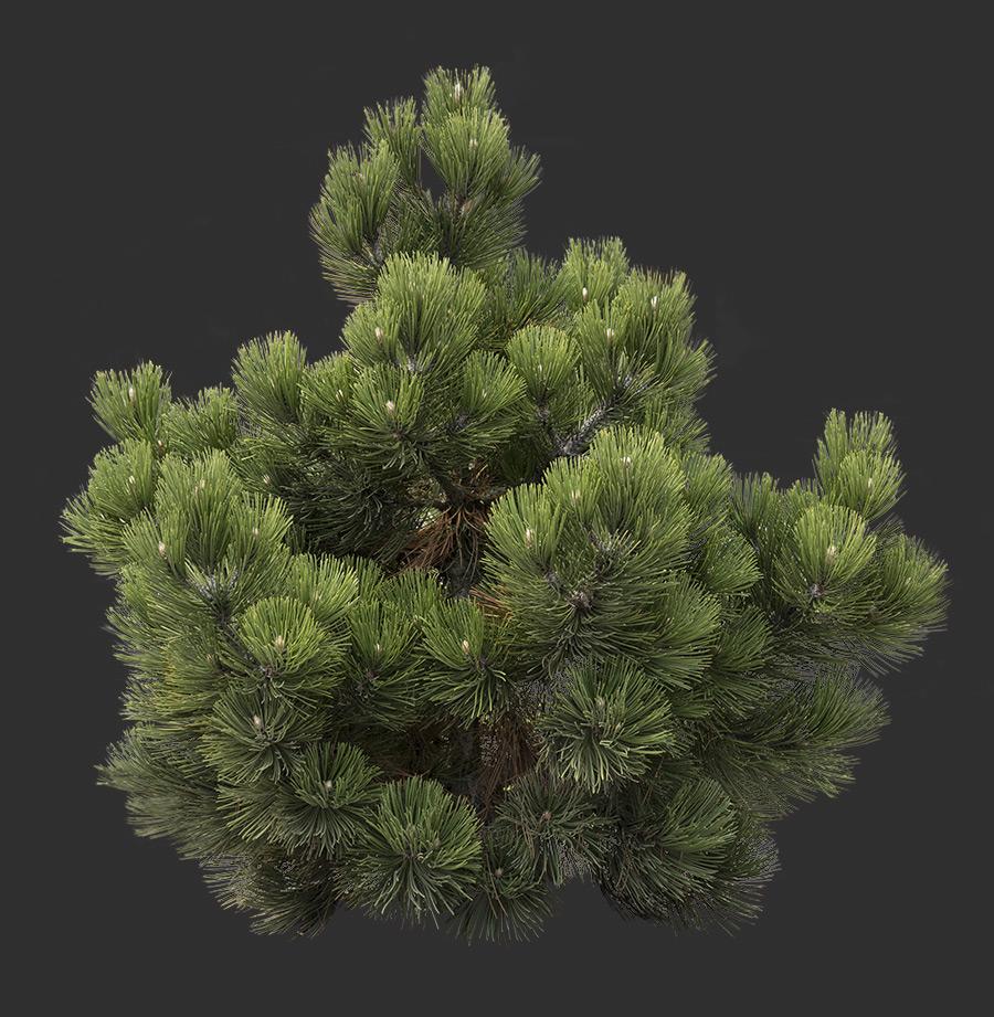 Bush Cutout 04