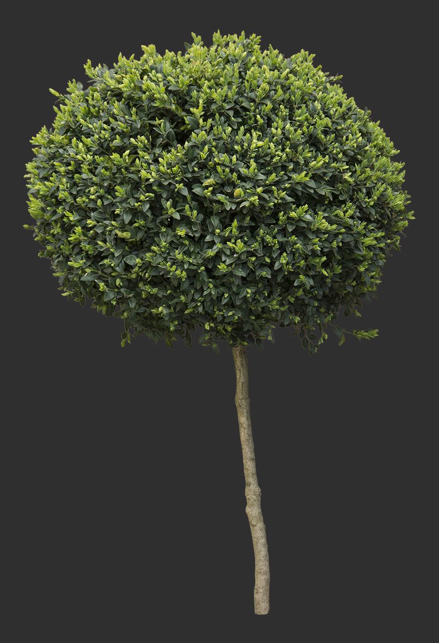 Tree Cutout 02