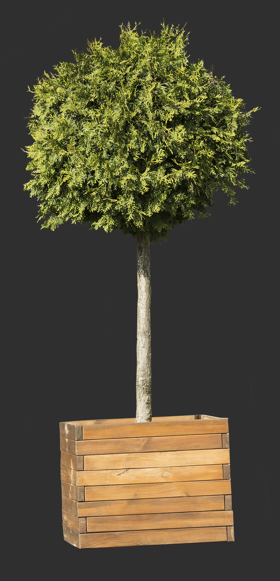 Tree Cutout 03