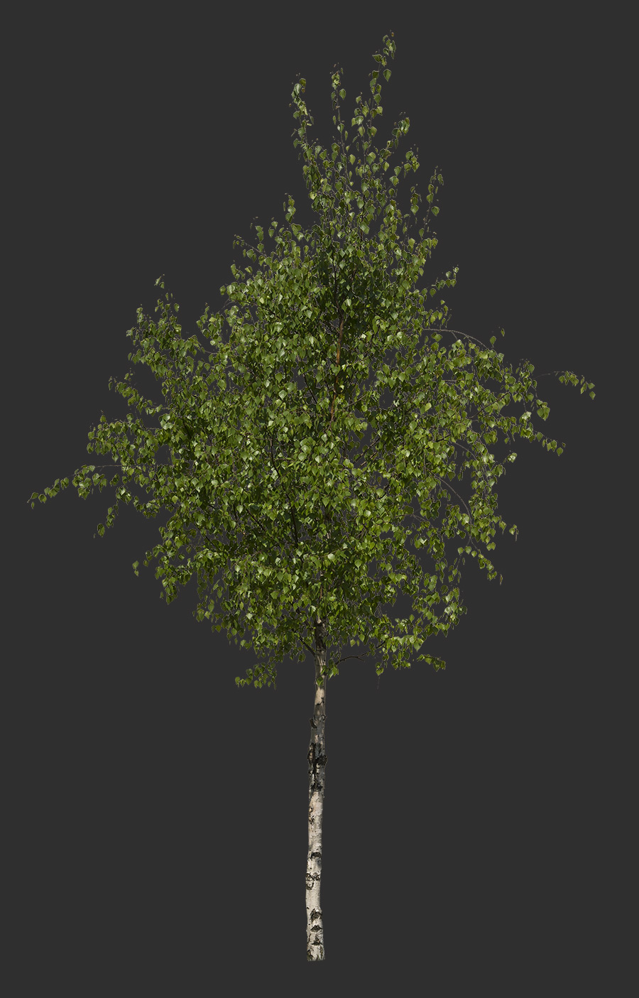 Tree Cutout 04