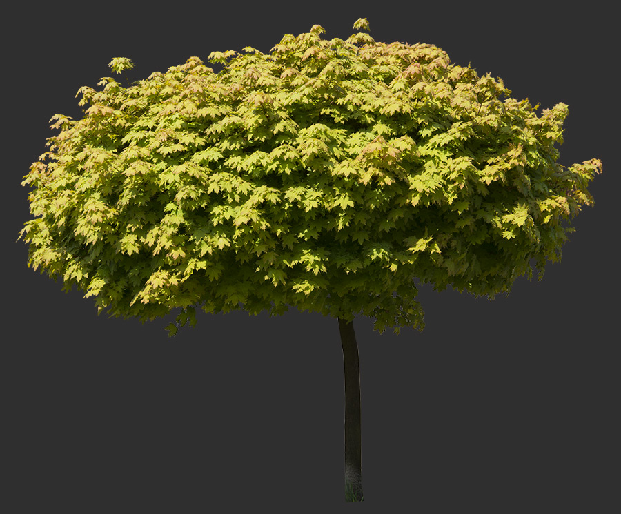 Tree Cutout 05