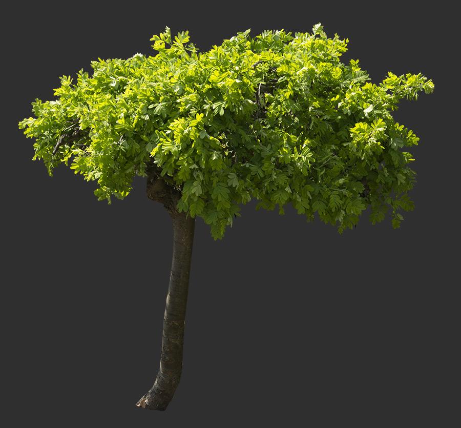 Tree Cutout 06