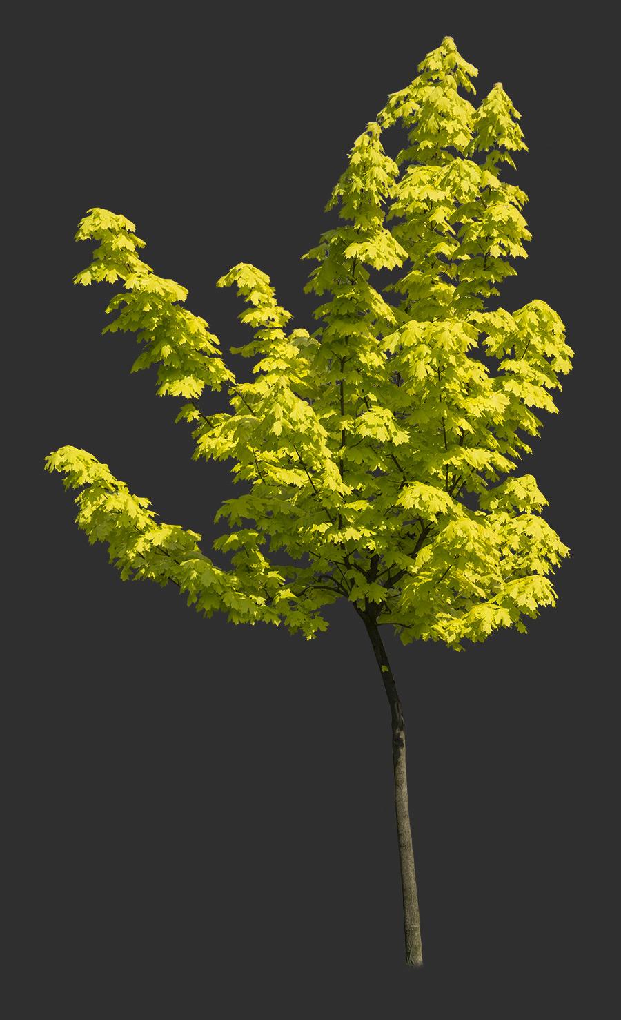 Tree Cutout 07
