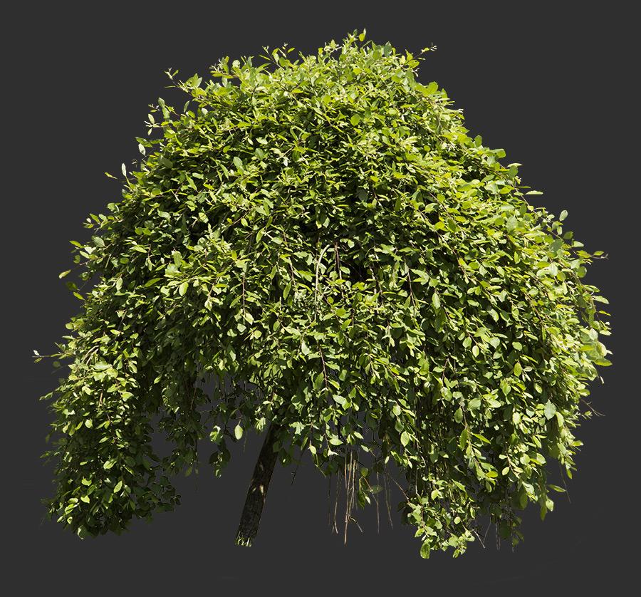 Tree Cutout 08