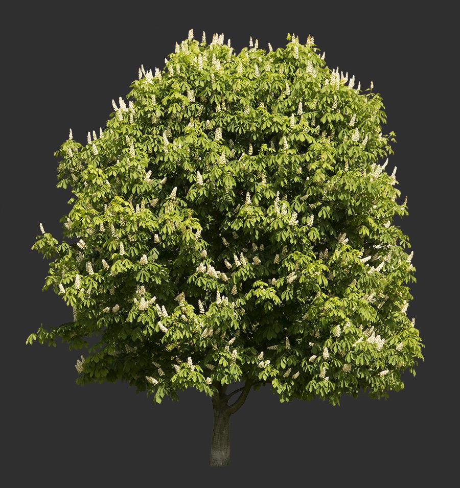 Tree Cutout 09